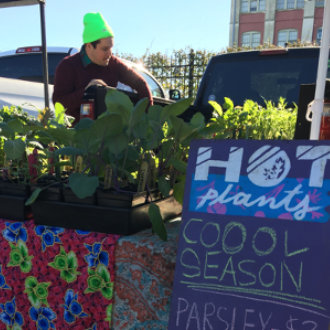 vendor-hot-plants-330x330.jpg